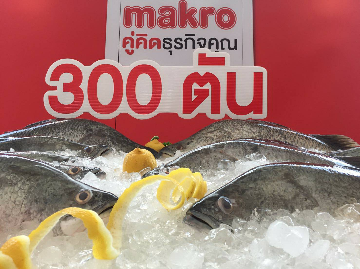 แม็คโคร ปลื้ม! ดันยอดรับซื้อปลากะพง ช่วยเกษตรกรระบายผลผลิตได้กว่า 300 ตัน